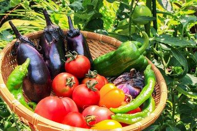 国産の野菜